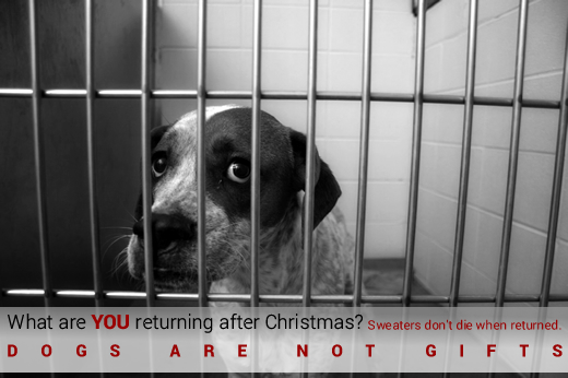 dogs_not_gifts